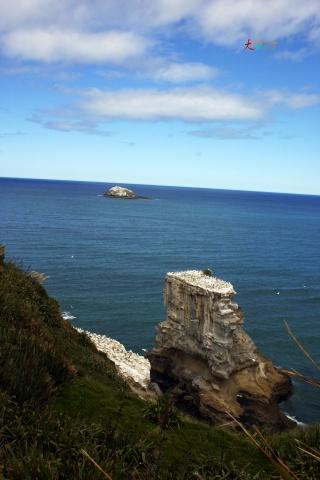 【原创摄影】新西兰印象10P - 大树欲静 - 大树欲静的博客