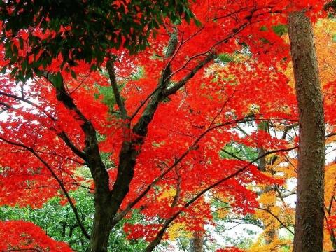 歌曲红叶祭奠献给地震中远走的宝贝们 (原创) - 感叹人生 - penglaiyou36207的博客