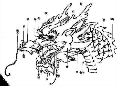 【引用】龙的身体结构