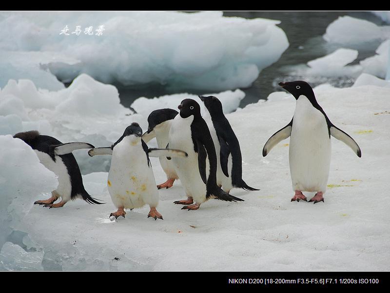 南极(十五) - 海阔山遥 - .