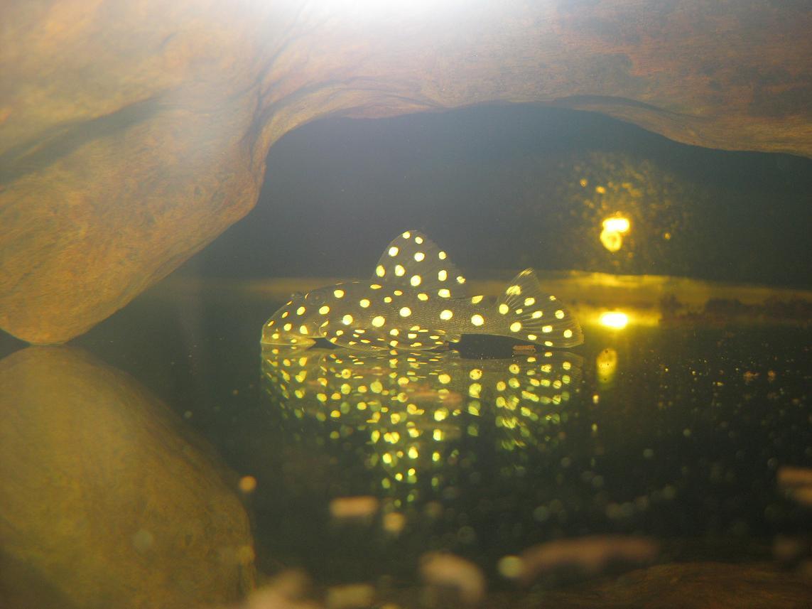 异型版---蜗居!!! - x-999 - 牧 鱼 水 族
