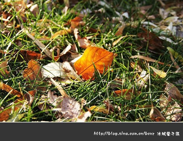 冬天握手 - a开心快乐的英子 - 开心快乐的英子欢迎您