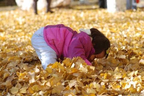 美丽的叶子 可爱的贝贝 - 贝贝的爸妈 - 贝贝的爸妈