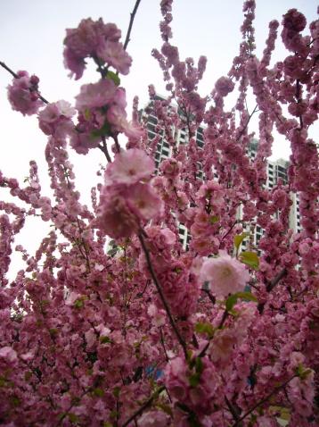 公园的春天 - 雪中雨人 - xuezhongyuren的博客