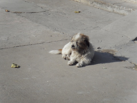 [随拍] 两只晒太阳的狗狗 - 摸神 - 猫猫和愉快的伙伴们