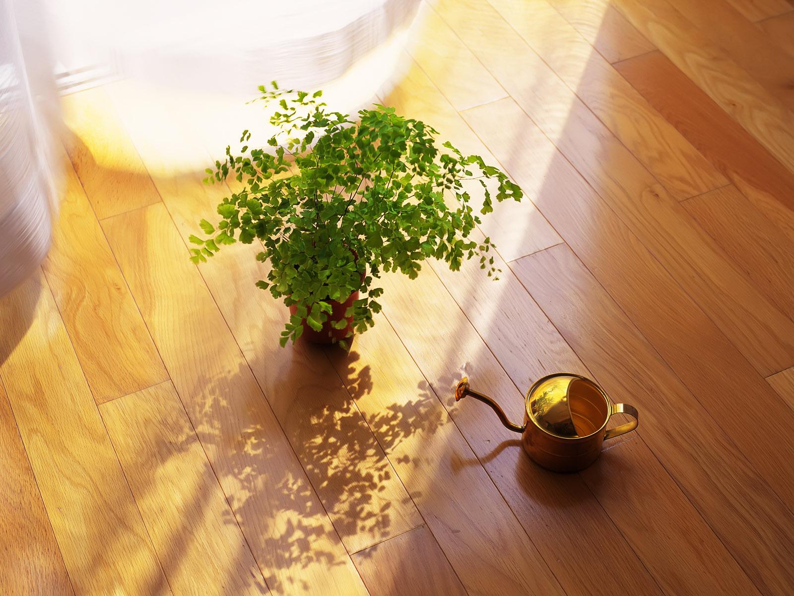 视觉大餐-静物特写 - 沉默是金 -   沉默是金de家园