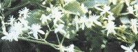 尿路结石小方 - 夏日之冰(4) - 情感交流平台