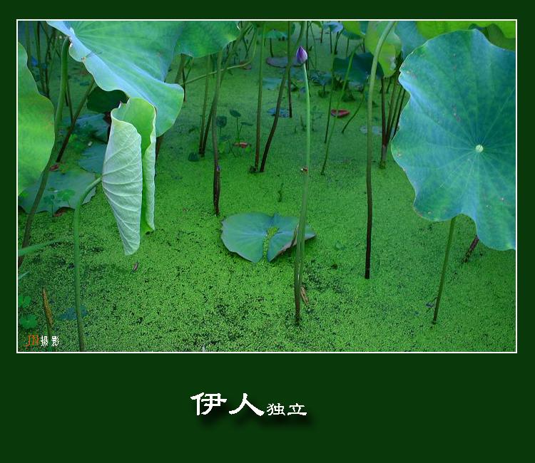 【原创摄影】遗世独立 - 江南暮秋 - 俗世的幸福