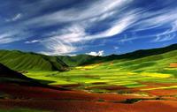 陇上美景——甘南桑科草原 - 大路有明 - 大路有明
