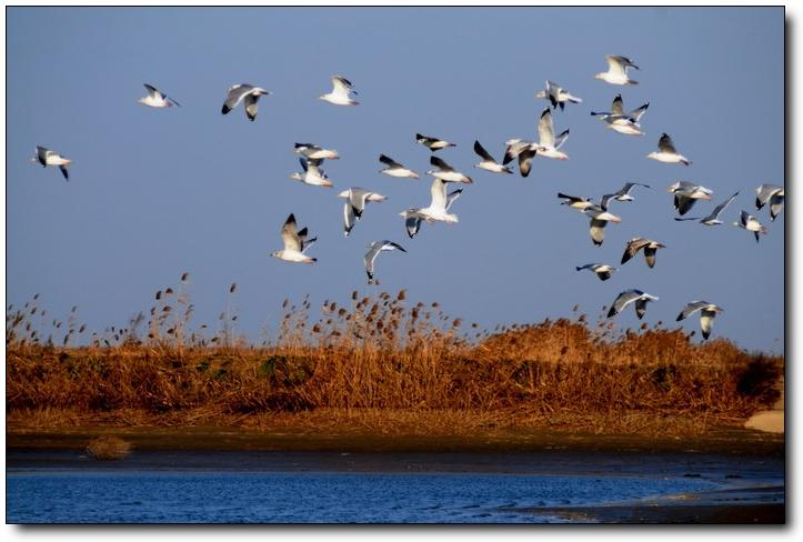 (原创)黄海湿地自驾游(9)——鱼塘观鸟 - 鱼笑九天 - 鱼笑九天