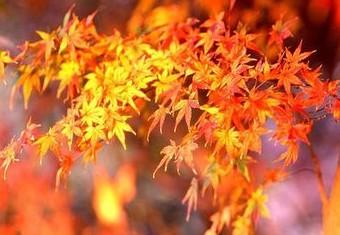【原创小说】忧伤的叶子(2) - 芊芊若水 - 童心中的童话