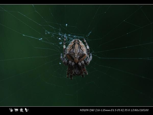 [原创]《蜘蛛侠》 - 海狮 - 海狮de视觉空间