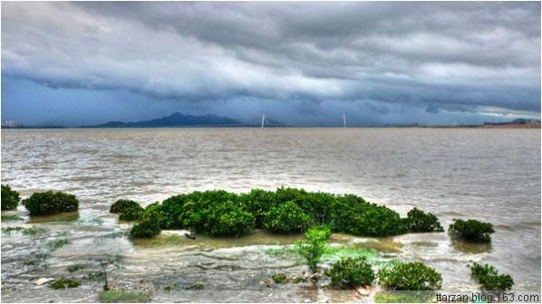 [原]暴雨过后·红树林海边 - Tarzan - 走过大地
