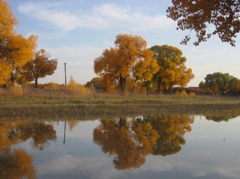 (原创)金色的胡杨 不朽的生命 - 真水无香  - 香格里拉 花开的地方