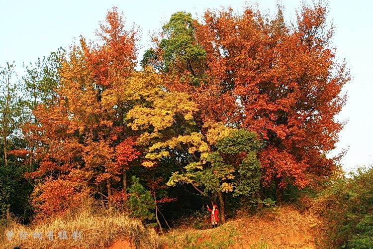 (原创摄影)  粤北采风   层林尽染 - 曾经拥有 - 我的摄影花园