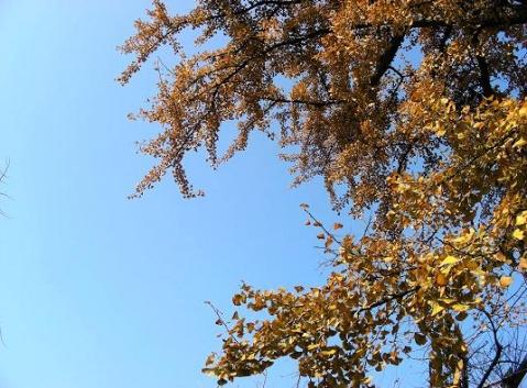 八都岕深秋的阳光 - 落落 - 落落的博客