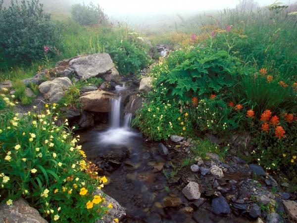 引用 绝色美景欣赏 - 小草 - 小草