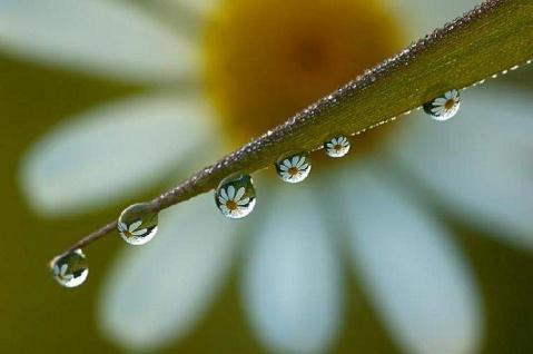 音乐情和晶莹剔透的水珠 - ming - 星晨乐园