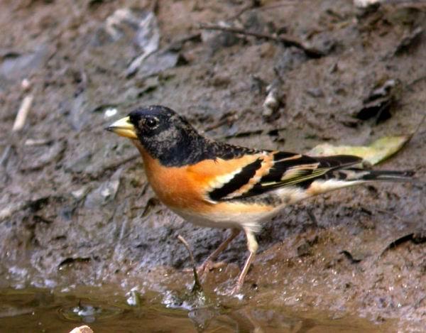 世界上最傻的鸟儿——苏雀 - 国慧 - 国慧的生态文学博客