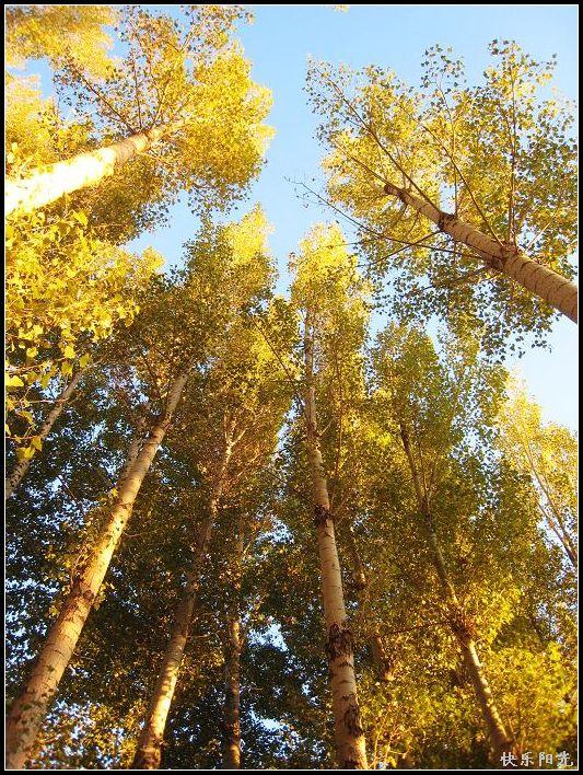 微信头像森林阳光分享展示