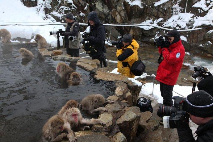 日本猕猴泡温泉享受至极/组图