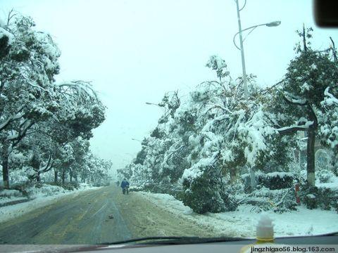 雪啊,雪!(原创) - 青稞 - 青稞博客