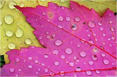 秋雨  - 余音 - 汀兰小居