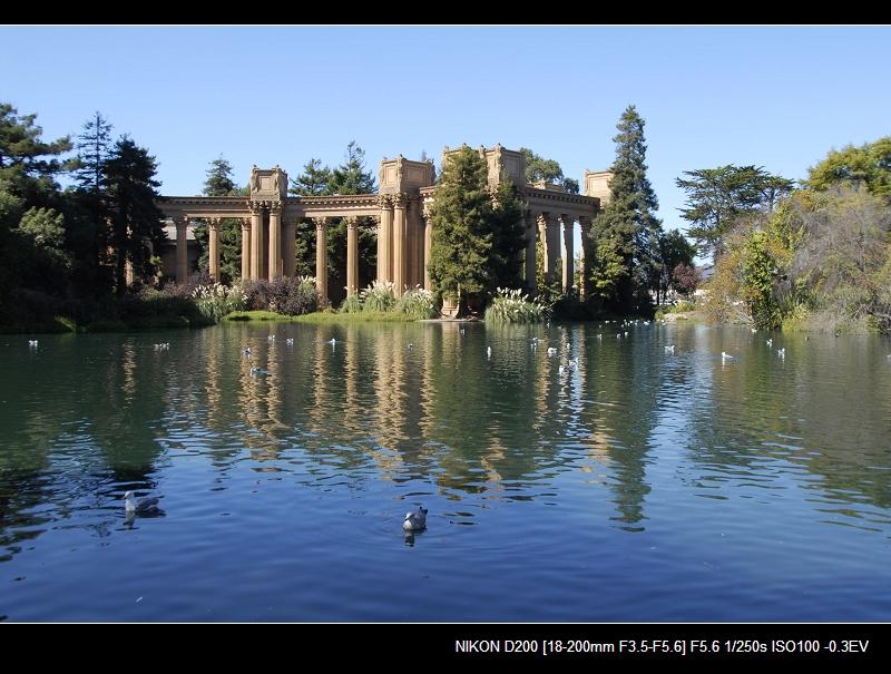 旧金山之秋 - 西樱 - 走马观景