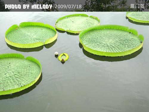 厦门·鼓浪屿   (上) - melody.dd - 华丽的D调
