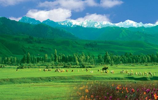新疆伊犁库尔德宁草原风光