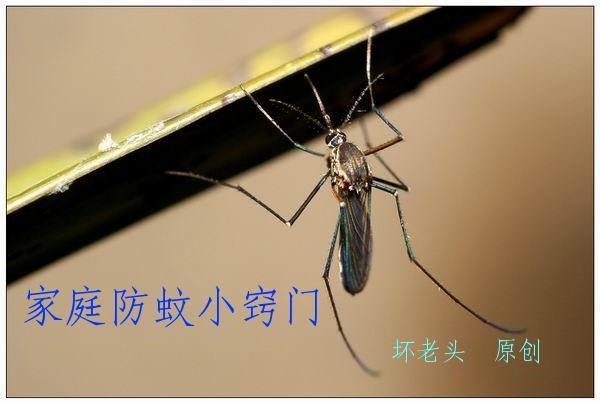 家庭防蚊小窍门 - 坏老头 - hlt50的博客