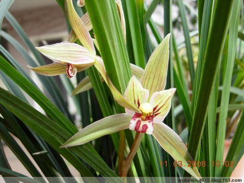 我的小花园[原创图文] - shui mo hua - shuimohua欢迎你,来访的朋友!