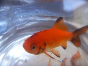 不变的只有小鱼 - Yoki - 宝儿的博客