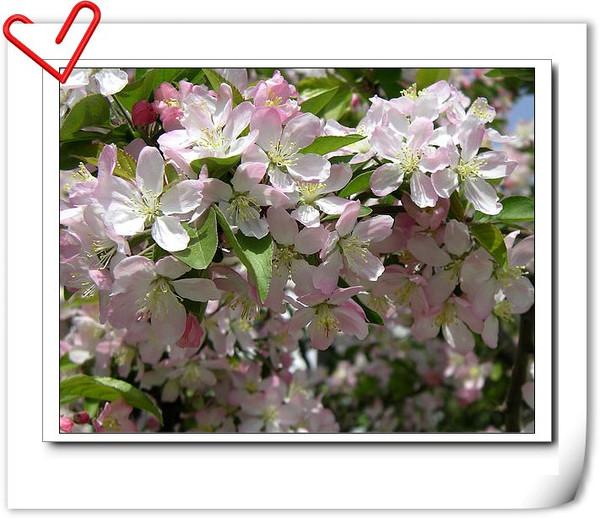 桃花依旧笑春风--烟雨摄影作品欣赏 - 烟雨蒙蒙 - 烟雨蒙蒙的博客