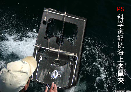 英白鲨VS周老虎 - 王鹏越 - 阿魔的超媒体观察