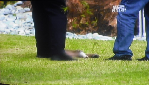 美国迈阿密公园发生虐杀猫猫事件之后