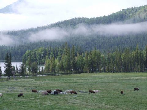 新疆:禾木 喀纳斯 - 如果 - 我的博客