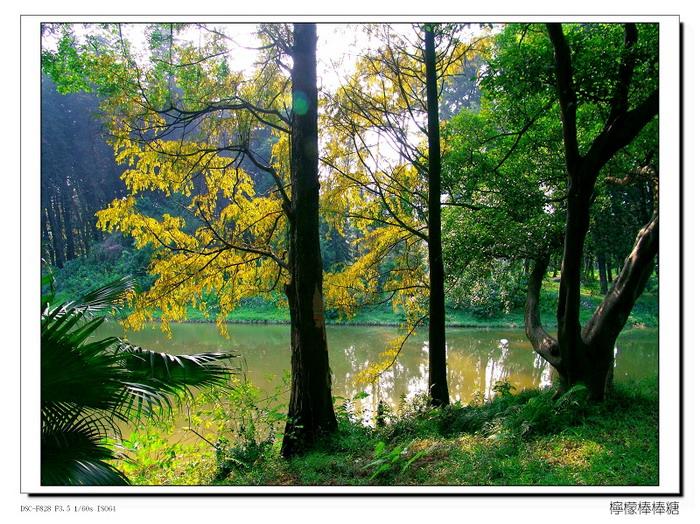 【原创】_广州随拍 - 柠檬棒棒糖 - 柠檬棒棒糖的田园