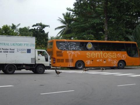 圣淘沙风情——走进新加坡(六) - 蔓延 - 蔓延慢语