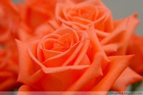 花卉摄影 - angel.yzx - 惠风和畅