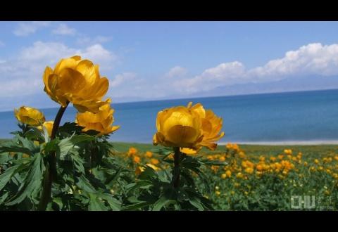 精美植物摄影 - 阳光脚步 - 阳光下的精彩