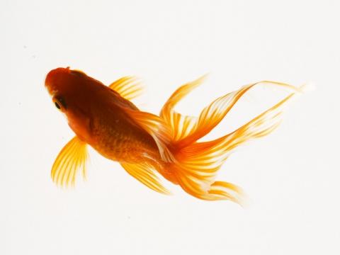 (原)随笔-跳跃要食物的小鱼儿 - 绿野仙踪 - 绿野仙踪的博客