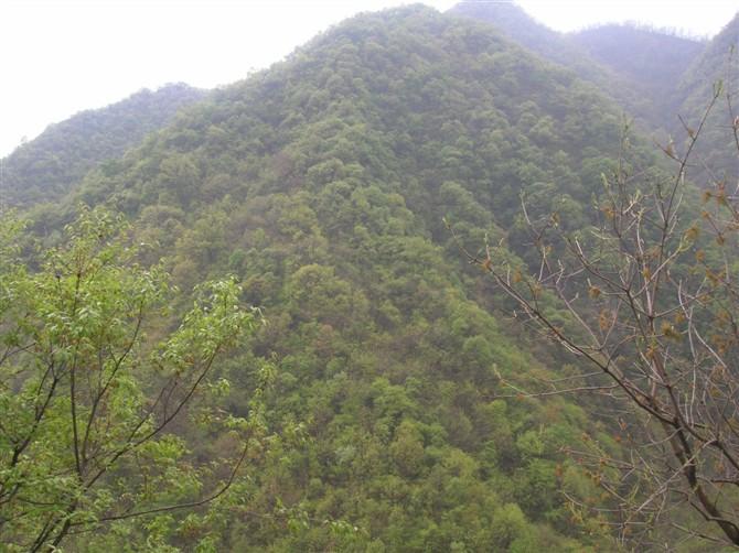 2010年4月30日 - 心雨轩 - 心雨轩