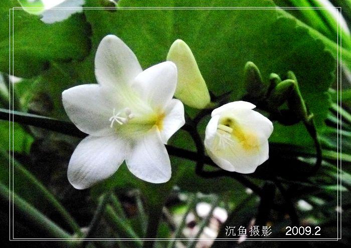 原摄旖旎春早 - 沉鱼 - 沉鱼雅居