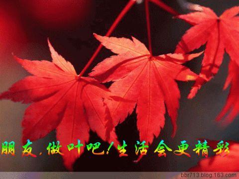 引用 [原创] 红叶*秋意 - 小草 -  高山流水