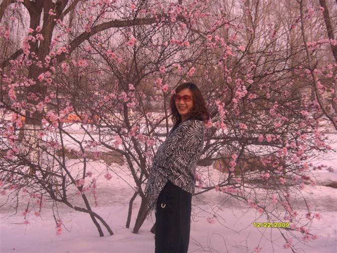 冬日情怀 - 人在天涯 - 人在天涯