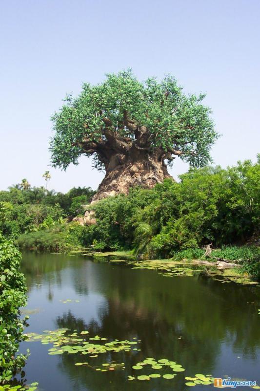 一辈子都看不到的神奇的大树(让你震惊的图片) - 香儿的博客