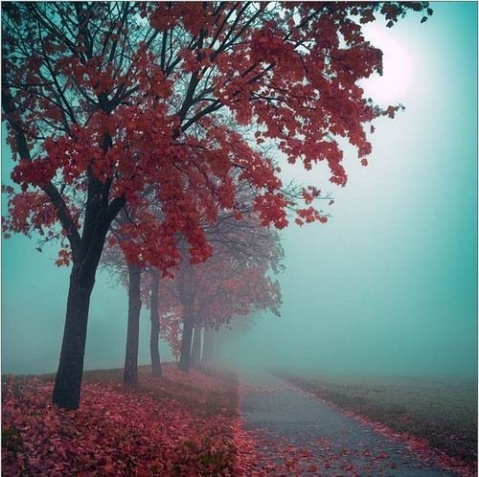 【图文】据说是全球最炫的50张照片  - 秋夢園主☆秋 - ☆秋夢園☆