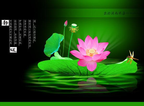 大乘妙法莲华经(净台法师)61──70集 - 春兰之馨香 - 香光庄严卍念佛三昧
