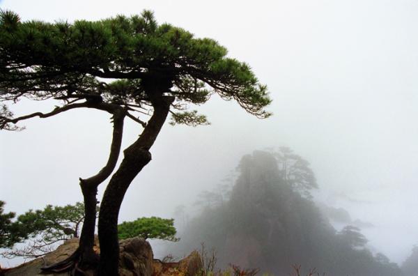 [原创]神圣芳草地---爱的奉献(16) - 雪山老人 - 雪山老人的博客